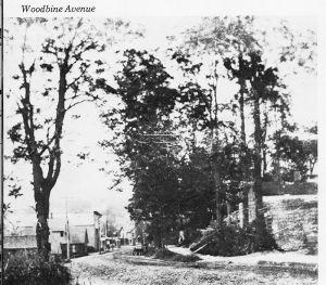Woodbine Ave